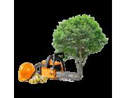 Обрезка и спиливание деревьев